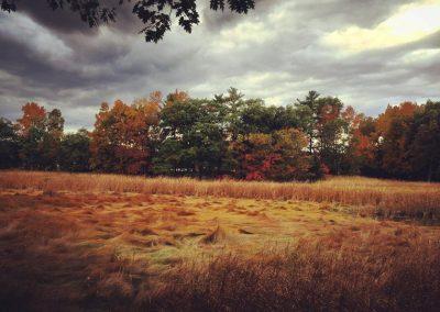 Along_the__winnicut_river.__marsh_grass_in_th